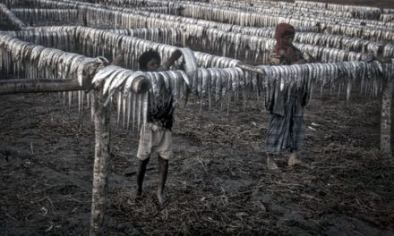 THE TELEGRAPH ‑Satellites reveal 'child slave camps' in Unesco-protected park in Bangladesh