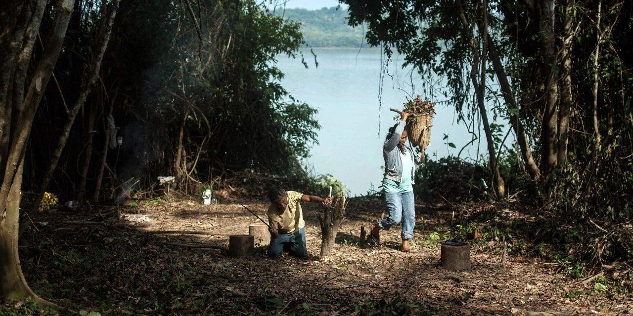 Le Saint-Siège accélère sur la diplomatie écologique avant le synode sur l'Amazonie