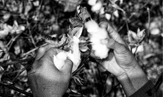 Lawyers challenge UK imports of 'slavery-tainted' Uzbek cotton