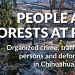 The Global Initiative Against Transnational Organized Crime –  PEOPLE AND FORESTS AT RISK Organized crime, t